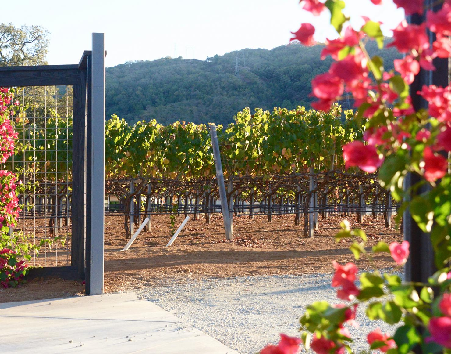 Front entrance gate for Sycamore Creek Vineyards