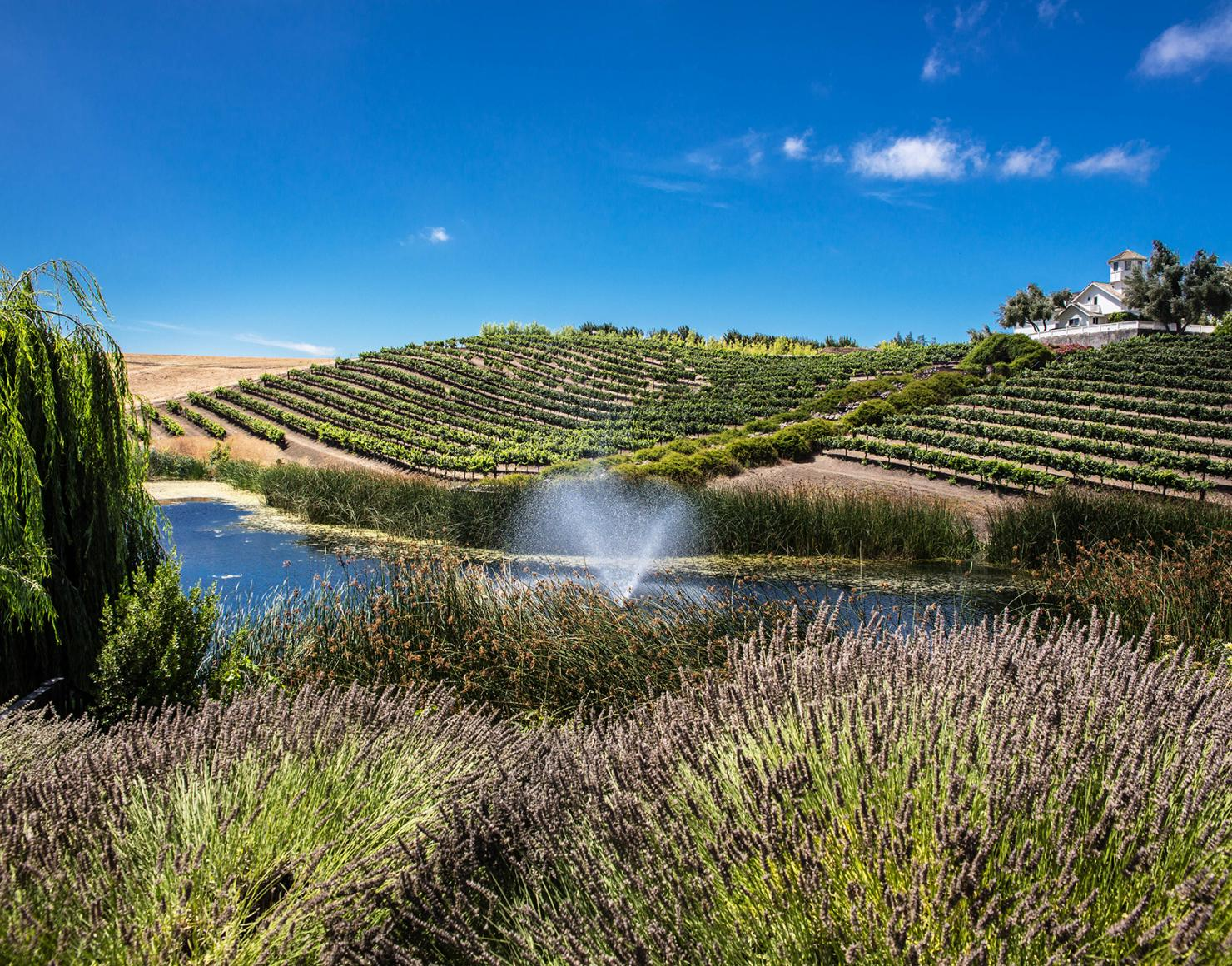 View of Leal Vineyards with fountain in the center point